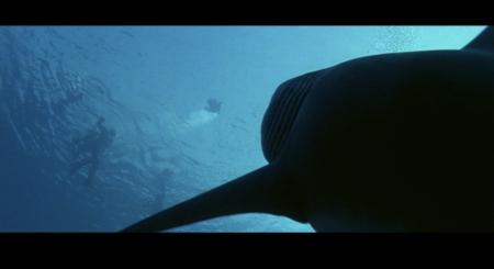 Deep Blue Sea - Final Hunt