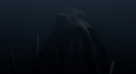 Mega Shark Vs Giant Octopus - Giant Octopus2