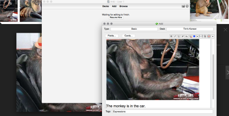 monkeys-in-the-car
